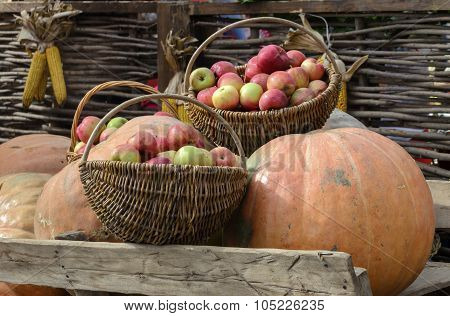Autumn Harvest. Pumpkin And Apples In A Basket On The Background Of The Fence