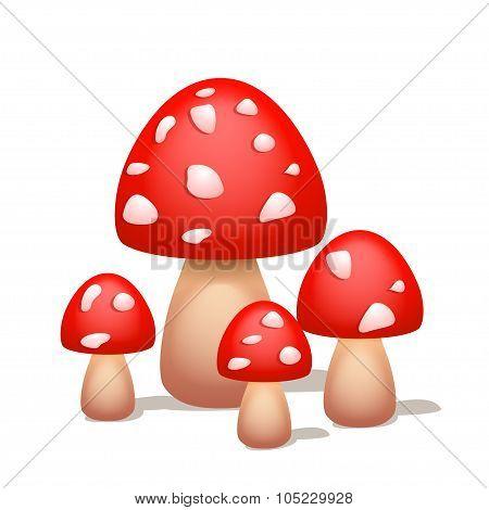 picture of mushroom