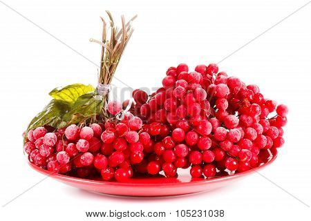 Viburnum On The Plate, Frozen For Long Term Storage, White Background