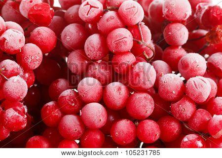 Viburnum, Frozen For Long Term Storage,
