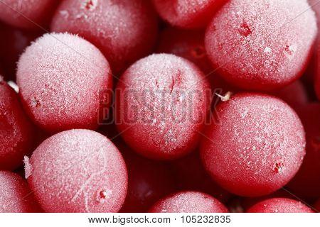 Guelder Rose,, Frozen Stocks For The Winter