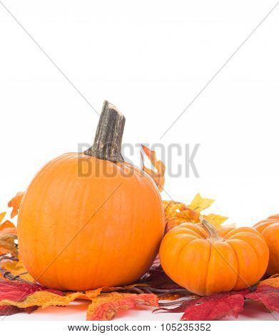 Autumn Pumpkin Decoration
