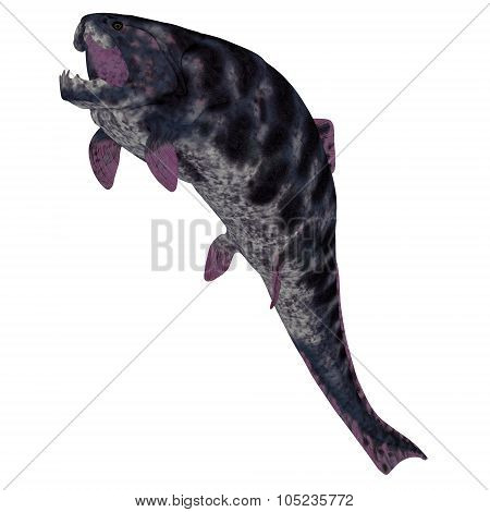 Dunkleosteus  Fish On White