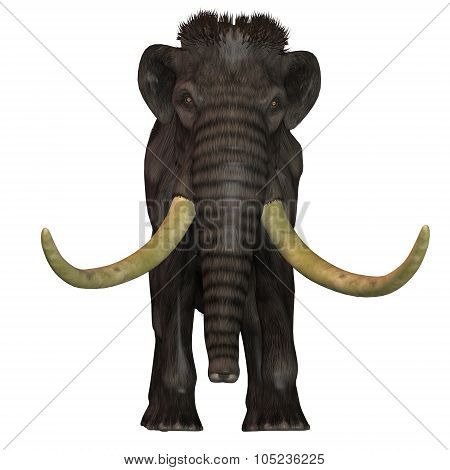 Woolly Mammoth Front
