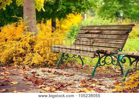 Autumnal landscape with wooden bench and yellow leaves. Illustration