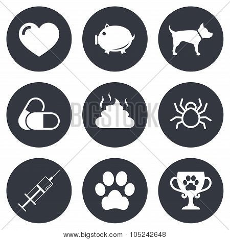 Veterinary, pets icons. Dog paw, syringe signs.