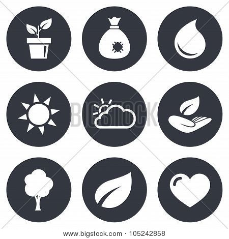 Sprout, leaf icons. Garden and weather signs.
