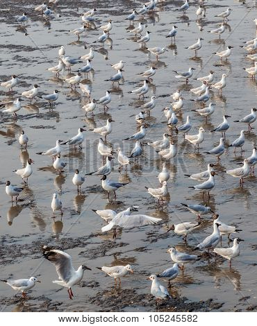 The Flock Of White Seagulls Standing At The Slush Shoreline.