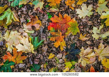 Autumn carpet from leaves