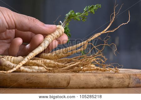 Hand With Fresh Parsley Roots