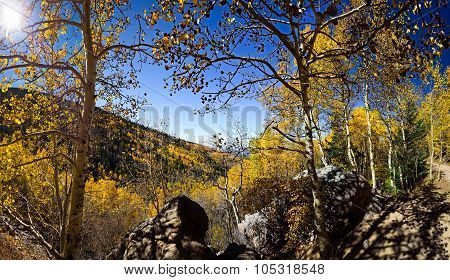 Aspen Vista Panorama