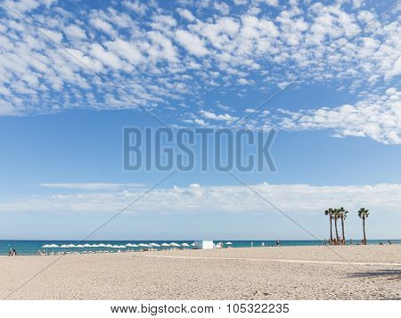 Palm Trees On The Beach Of Alicante, Costa Blanca