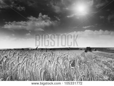 Barley Field With Combine Harvester