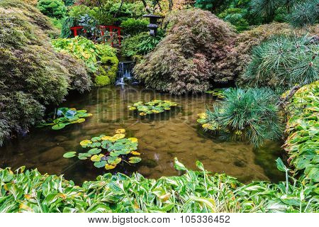 Japanese garden. Small quiet pond, overgrown with lilies. Scenic decorative park Butchart Gardens on Vancouver Island, Canada