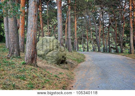 Road In Pine Park