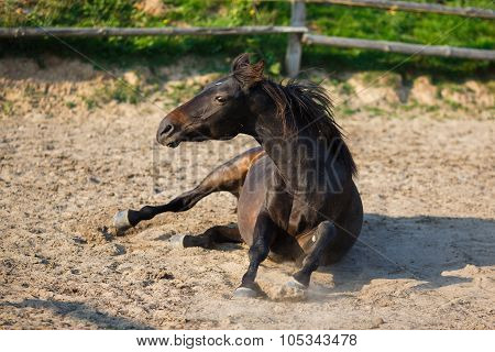 Horse Lying In The Stable