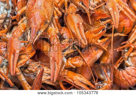 Many Red Lobsters For Sale