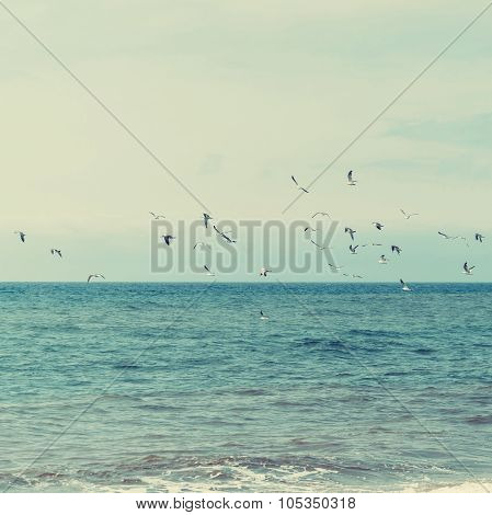 Seagulls Are Flying Over The Ocean