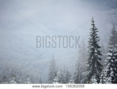 Winter trees in the mountains. With space for text