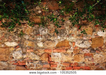 Ancient, retro brick, stone wall with ivy. Vintage, grunge background