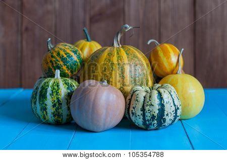 pile of small cute pumpkins at pumpkin patch