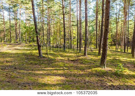 Autumnal Forest Landsape