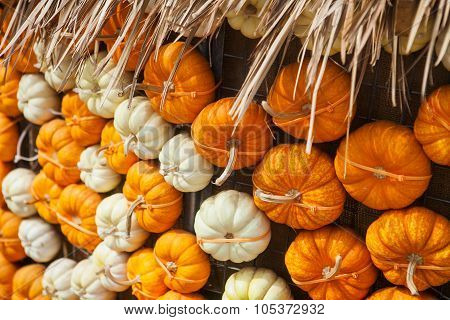 Pile of colorful pumpkins. Background for the autumn season and Halloween