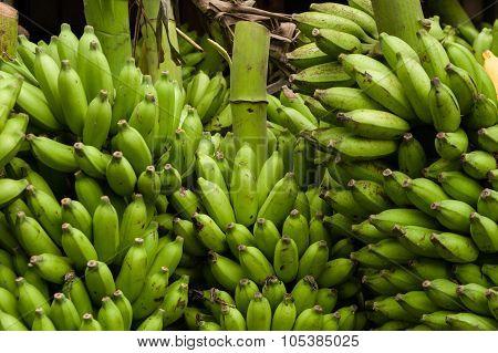 Stack Of Green Bananas