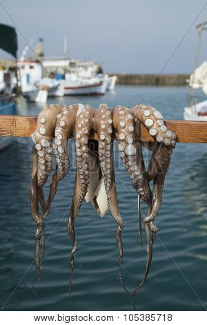 Octopus drying on a stick in Paros, Greece