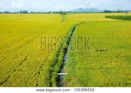 Vietnam Countryside Landscape, Rice Field
