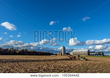 Amish Farm With Belgiam Draft Horses Pulling A Plow In Autumn Near Sunset