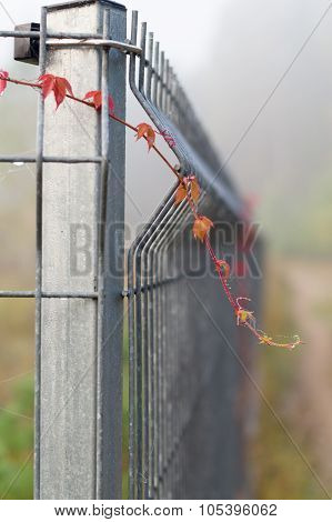 Closeup On Metal Rod Fence With Climbing Plants