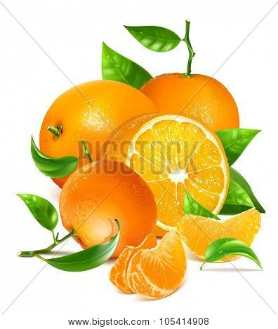 Fresh ripe oranges and tangerines with leaves. Vector illustration.