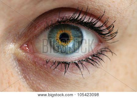 Eye Looks On Viewer Concept Macro