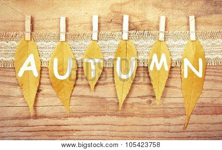 Autumn leaves on a clothespin.