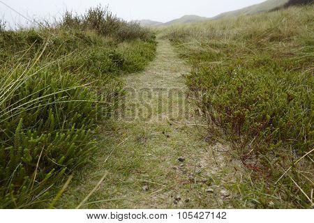Amrum (germany) - Path Through Grass-covered Sand Dunes