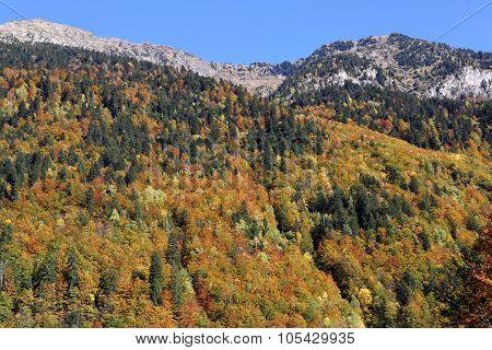 Autumn Hillsides
