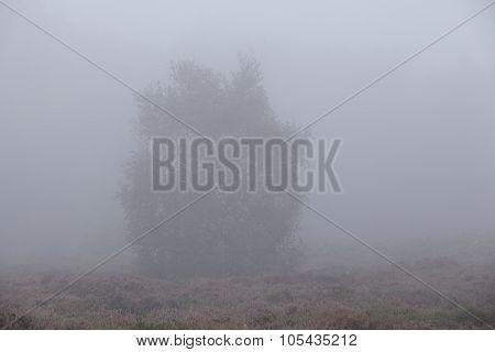 Amrum (germany) - Tree At Fog