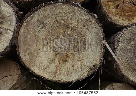 Amrum (germany) - Pile Of Tree Boles