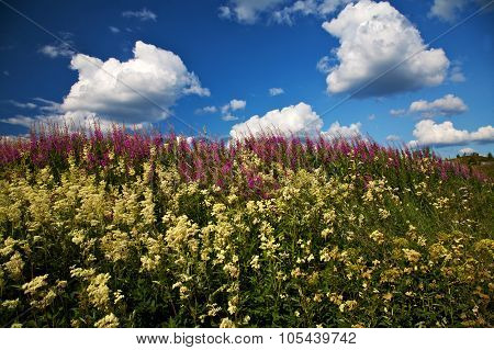 Wild Flowers And A Partly Cloudy Sky