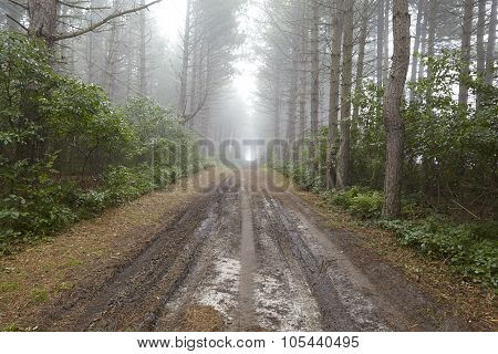 Amrum (germany) - Forest Path At Fog