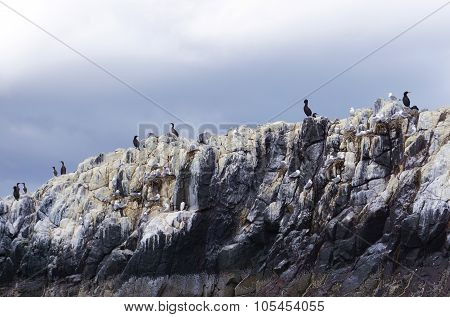 Nesting Birds Atop A Farne Islands Cliff, Northumberland, England