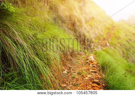 Beautiful pathway landscape in mountains, Annapurna area, Nepal