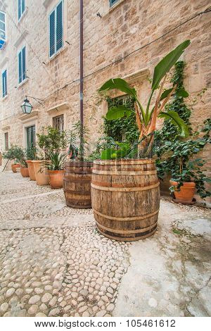 Plants and palms in old wooden barrels in narrow street in the Old Town in Dubrovnik, Croatia, m