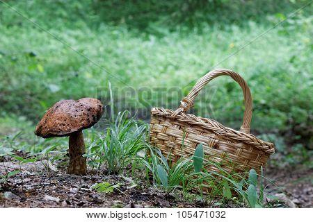 Large Mushroom And Mushroom Basket