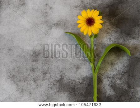 Condolence Card - Yellow Flower