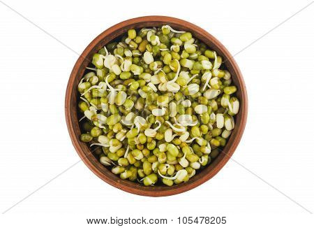 Raw Mung Beans Sprouts