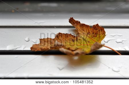 Close-up of autumn leaf with water drop