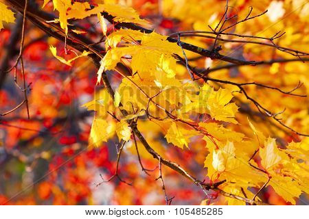 Autumn Background Of Gold And Red Autumn Leaves
