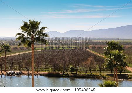 Vineyard in the Guadalupe Valley near Ensenada, Mexico